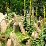 Velho Cemitério Judeu