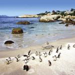Boulders Beach, Cidade do Cabo, África do Sul
