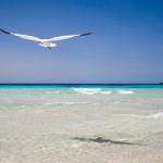 Praia Son Bou
